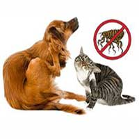 Trattamenti anti-parassitari